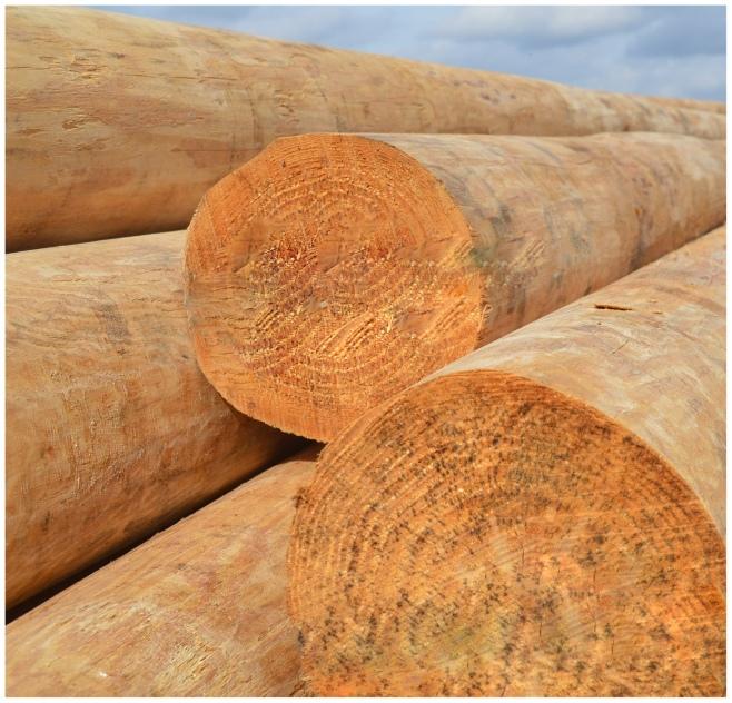 logpoles.jpg